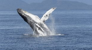 If You Want To Change Your Outlook – Go Whale Watching.