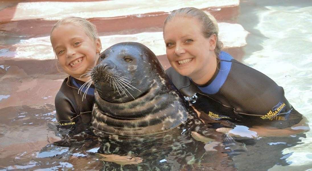 What to Know Before Going Swimming with Seals